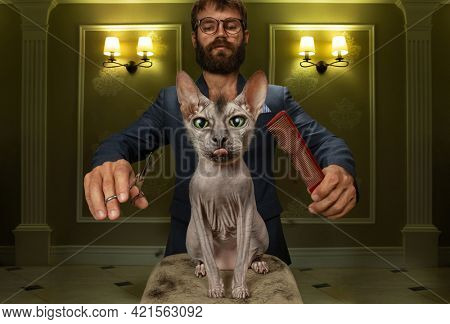 The groomer cuts a punk style of a sphinx cat, cuts a mohawk with scissors. The cat shows his tongue, expressing his displeasure