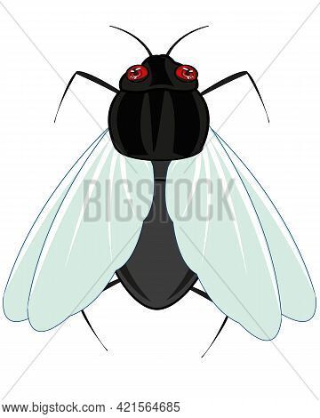 Insect Fly On White Background Is Insulated