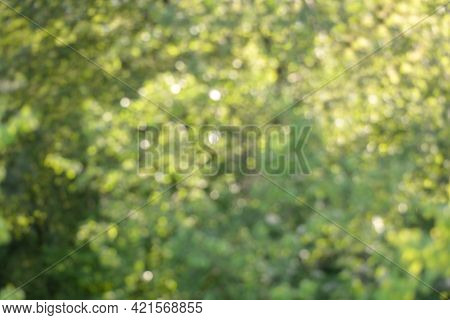 Yellow-green Blurred Background. Abstract Background Wallpaper.green Background With Bokeh. A Design