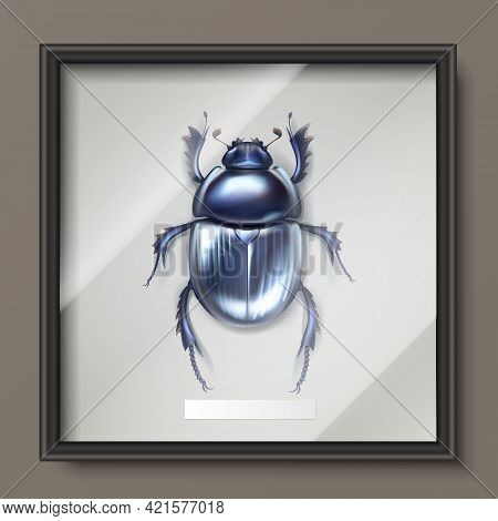 Vector Framed Dark Blue Shiny Dung Beetle Hanging On Wall