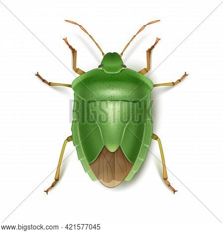Vector Green Stink Bug Close Up Top View Isolated On White Background
