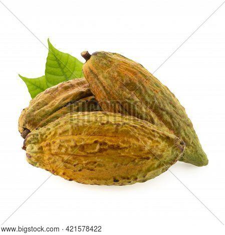 Cocoa Varietieties Ics 40. Cocoa Fruit, Raw Cacao Beans, Cocoa Pod. Fresh Cocoa Fruits Isolated On W