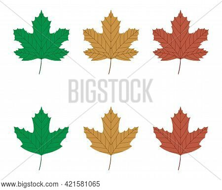 Vector Illustration Of Green, Yellow And Red Sycamore Leaves Isolated On White Background. Maple Lea
