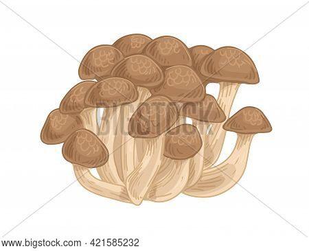 Asian Shimeji Mushrooms. Clump Of Wild Forest Fungi. Fresh Raw Fungus. Natural Organic Vegetarian Fo