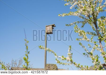 A Starling Peeks Out Of A Birdhouse Against A Clear Blue Sky Surrounded By Flowering Olive Branches.