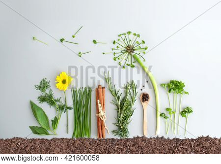 Seasonal Summer Herb Salad Ingredients And Dandelion Flower Made From Chives, Parsley And Spring Oni