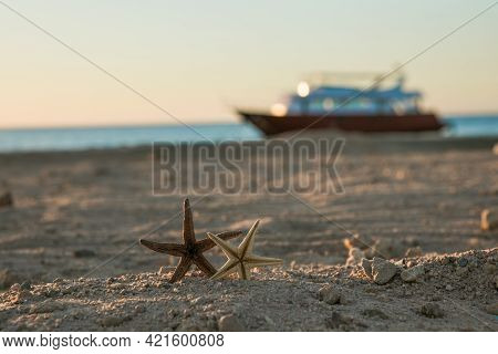 Starfish On Red Sea Beach. Summer Vacations. Tropical Nature.  Seascape Concept For Post Card Or Tra
