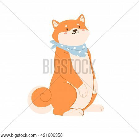 Cute Funny Dog Of Japanese Breed Standing On Hind Legs And Waiting For Food. Adorable Shiba Or Akita