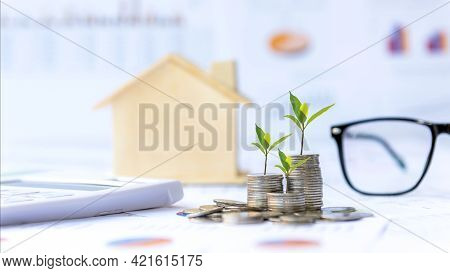 Investor Of Real Estate.  The Plants Growing On Money Coin Stack For Investment Home Green Nature Ba