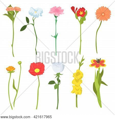 Set Of Cute Wild Field Flowers. Cartoon Vector Illustration. Ten Colorful Blooming Poppies, Chamomil