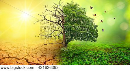 Tree In Two  With Very Different Environments Earth Day Or World Environment Day Global Warming And