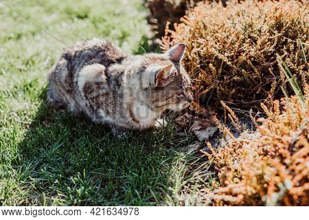 Cat Hides In Bushes On Plot Of House, Hunts For Birds