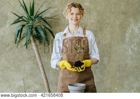 Happy Inspired Woman Gardener In Apron Replant Potted Houseplant In Greenhouse Holding Ground With S