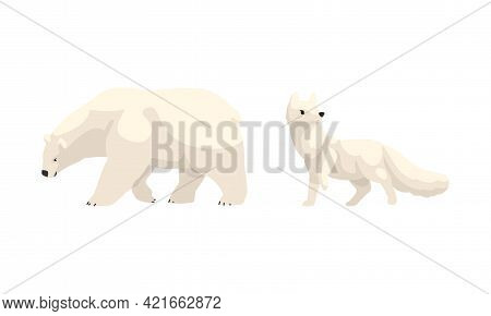 Arctic Animals Set, White Polar Bear And Fox Cartoon Vector Illustration