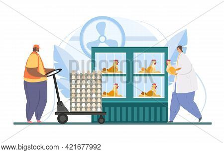 Chicken Eggs Poultry Farm. Man And Woman Care, Feed And Collect Eggs From Laying Hens. Avian Vet. Fl