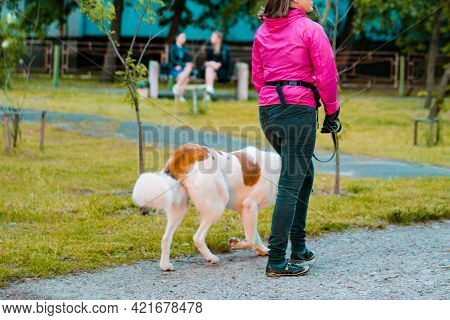 Woman In Pink Jacket And Black Pants Walking With White And Brown Dog In The Green Park. Outdoor. Tr