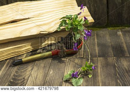 A Small Elegant Flower With A Root And A Clod Of Earth Stands In A Wooden Spoon Against The Backgrou