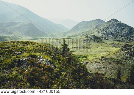 Scenic Alpine Landscape With Beautiful Fir Among Thickets And Wild Vegetations On Background Of High