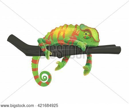 Chameleon Lying On Tree Branch. Zoo Tropical Forest Changing Color Lizard, Africa Or Madagascar Wild