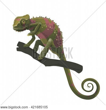 Chameleon Lizard Climbing On Tree Branch. Vector Zoo Animal, Africa Tropical Forest Reptile With Col