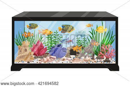 Aquarium Tank Cartoon Vector Illustration With Swimming Exotic Freshwater Fishes Seashells Seaweeds