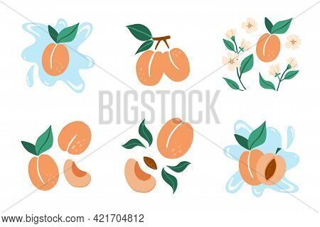 Apricot Set. Exotic Tropical Peaches Or Apricots Fresh Fruit Collection, Whole Juicy Peach With Gree