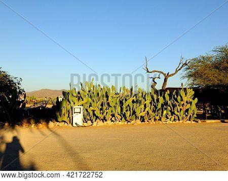 Windhoek, Namibia - 01 May 2012: Cactus In Namib Desert, Windhoek, Namibia