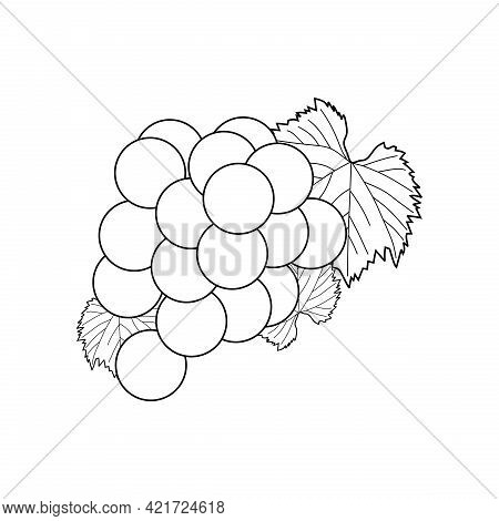 Illustration Vector Of Grape Fruit. Grape Line Icon Isolated On White Background. Grape Sketch