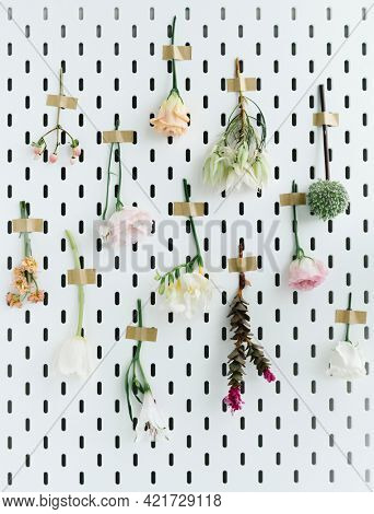 Pink and white flowers hanging upside down on a white wall