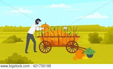 Farmer Male Character Puts Large Pumpkin In Cart, Wheelbarrow Full Of Vegetables. Agricultural Farm