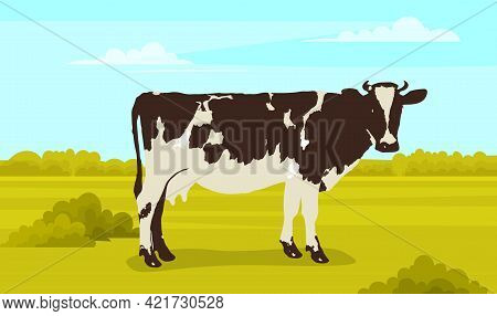 Cute White And Black Spotted Cow On Meadow With Green Grass. Farm Animal With Horns And Udder. Cow I