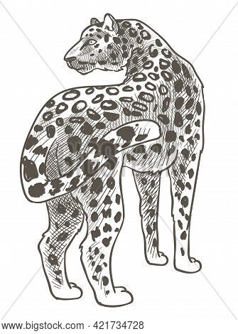 Leopard Animal With Spotted Fur, Wild Mammals