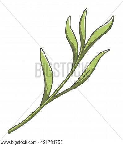 Tropical Flora Or Foliage, Nature And Lush Plant