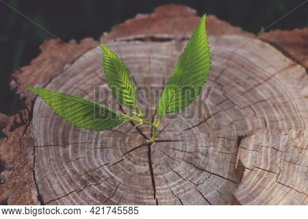 Young Green Seedling Growing Out Of Tree Stub Outdoors. New Life Concept