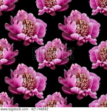 Floral Background. Seamless Pattern With Peony