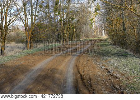 scene with dirt road in spring grove