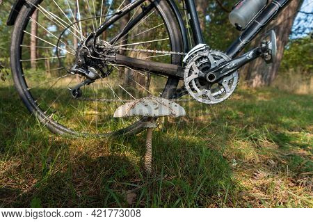 Kaliningrad, Russia, September 12, 2020.  Bicycle In The Woods. Cycling Through The Woods. Gathering