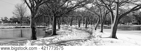 Black And White Picture A Snow Covered Tree Lined, Path Shoveled For Walking Between The Two Lakes A