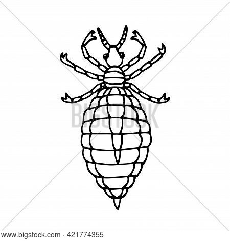 Head Louse, Parasite Insect, Bloodsucker. Vector Illustration With Black Ink Contour Lines. Isolated
