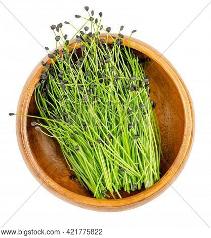 Chive Microgreens, In A Wooden Bowl. Ready To Eat Shoots Of Allium Schoenoprasum, With Seed Coats On