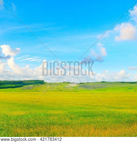 Green Field And Blue Sky, Grass In Spring Background, Agricultural Cereal Crop