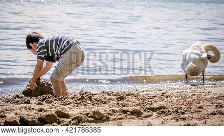 Child Playing Sands On The Beach While Swan Cleaning Feathers In Water. One Little Asian Boy In Casu