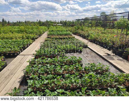 Garden Center. Garden Shop. Sale Of Plants, Trees And Flowers. Variety Of Plants, Trees And Flowers