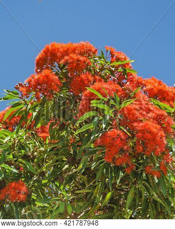 Red Flowers Tree Low Angle Shot
