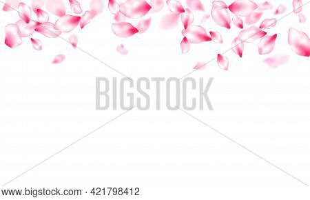 Spring Tree Flowers Parts, Airy Flying Petals Windy Blowing Background. Beauty Studio Concept. Sprin