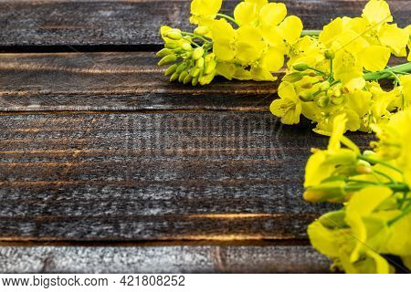 Colza Flower. Yellow Rape Flowers For Healthy Food Oil On Wooden Background. Rapeseed Plant, Canola