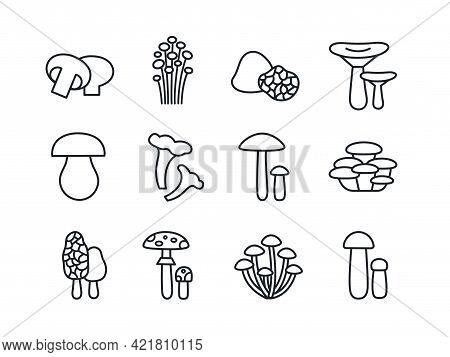 Mushrooms Icon Set. Vector Linear Icons Contour Shape Outline. Modern Glyph Design. Champignon Enoki