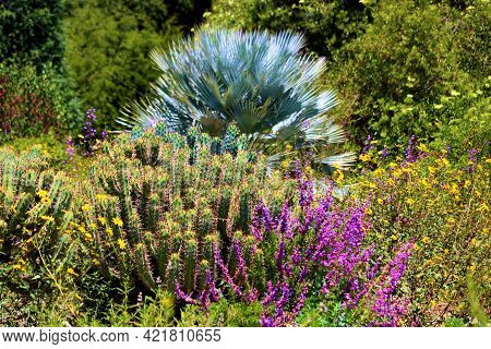 Chaparral Plants And Spring Wildflowers With A Mexican Blue Palm Tree Beyond Taken On A High Desert