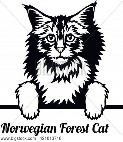 Norwegian Forest Cat - Cat Breed. Cat Breed Head Isolated On A White Background
