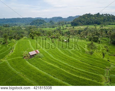 Small hut with rusty tin roof in the middle of paddy fields aerial view, in Bali, Indonesia